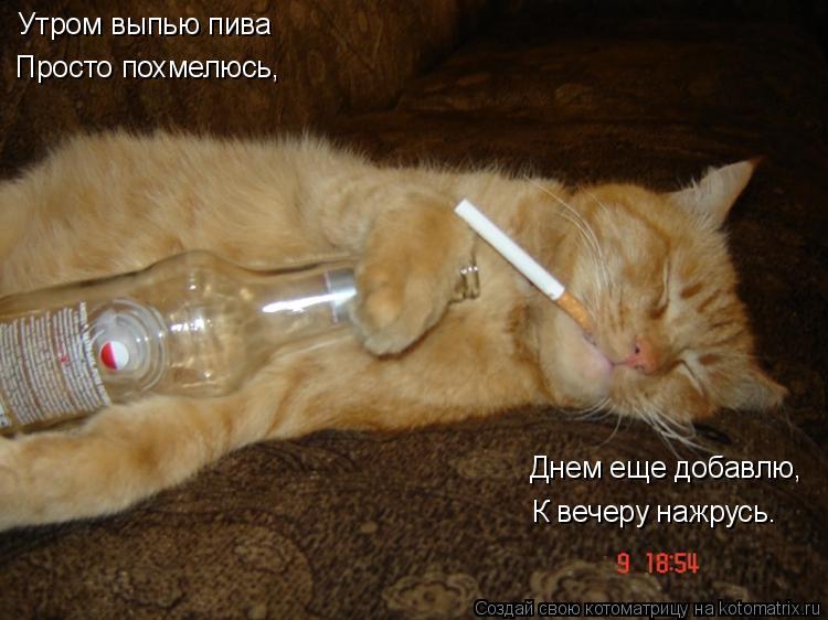 Котоматрица: Утром выпью пива Просто похмелюсь, Днем еще добавлю, К вечеру нажрусь.