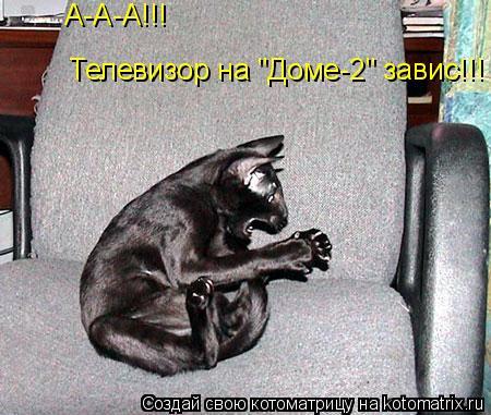 """Котоматрица: А-А-А!!!  Телевизор на """"Доме-2"""" завис!!!"""