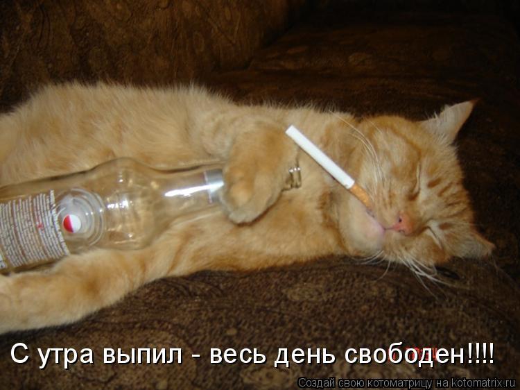 Котоматрица: С утра выпил - весь день свободен!!!!
