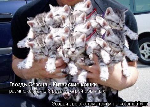 Котоматрица: Гвоздь Сезона - Китайские кошки размножаются в 3 раза быстрей обычных