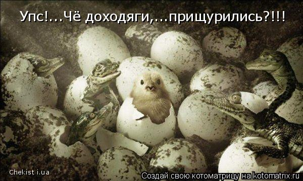 Котоматрица: Упс!...Чё доходяги,...прищурились?!!! Chekist i.ua