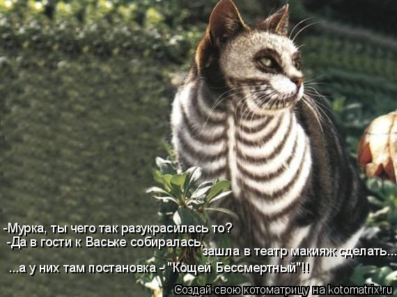 """Котоматрица: -Мурка, ты чего так разукрасилась то? -Да в гости к Ваське собиралась, зашла в театр макияж сделать... ...а у них там постановка - """"Кощей Бессмерт"""