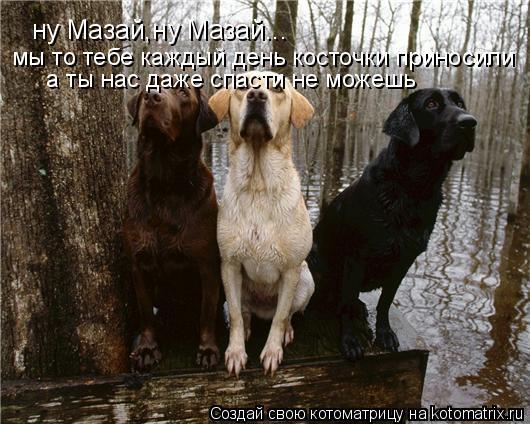 Котоматрица: ну Мазай,ну Мазай... мы то тебе каждый день косточки приносили а ты нас даже спасти не можешь