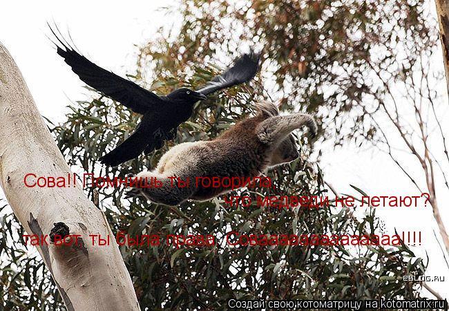 Котоматрица: Сова!! Помнишь ты говорила,  что медведи не летают? так вот, ты была права. Соваааааааааааааа!!!!