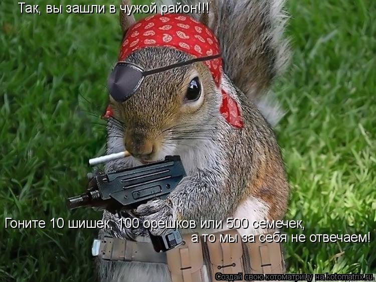 Котоматрица: Так, вы зашли в чужой район!!! Гоните 10 шишек, 100 орешков или 500 семечек,  а то мы за себя не отвечаем!