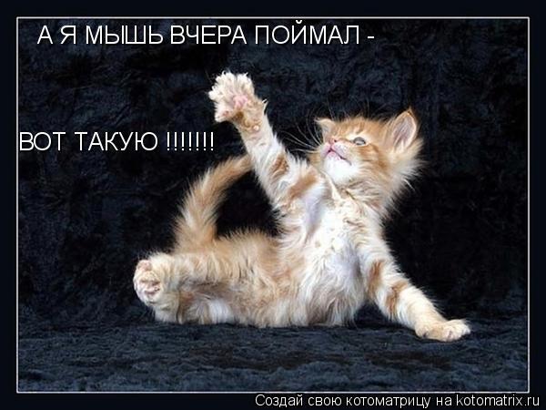 Котоматрица: А Я МЫШЬ ВЧЕРА ПОЙМАЛ - ВОТ ТАКУЮ !!!!!!!