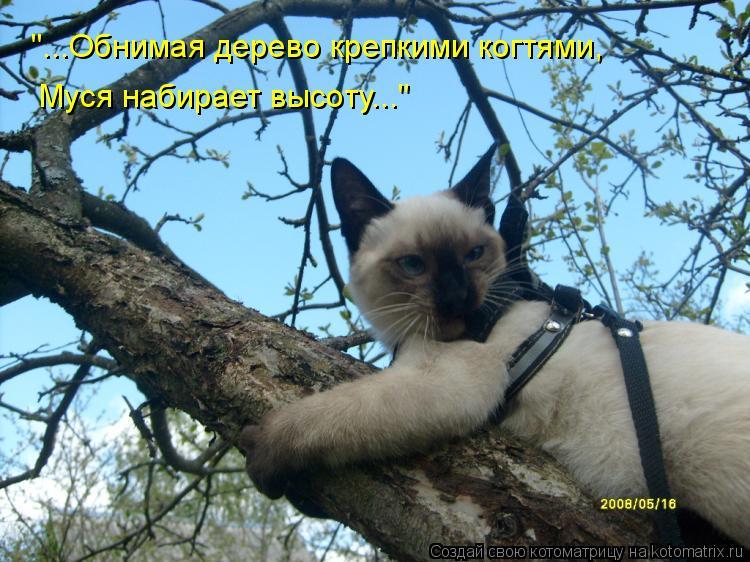 """Котоматрица: """"...Обнимая дерево крепкими когтями,  Муся набирает высоту..."""""""