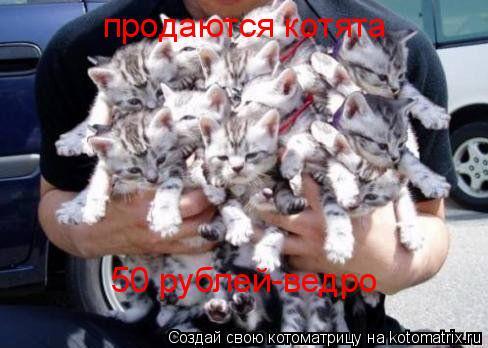 Котоматрица: продаются котята  50 рублей-ведро