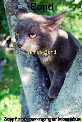 Котоматрица: Bond James Bond