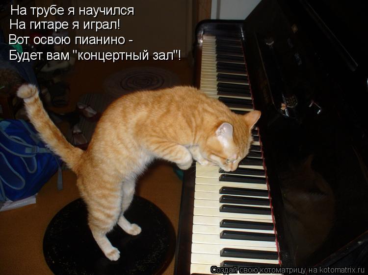 """Котоматрица: На трубе я научился На гитаре я играл! Вот освою пианино - Будет вам """"концертный зал""""!"""
