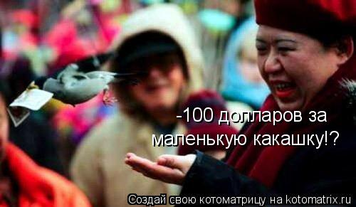 Котоматрица: -100 долларов за маленькую какашку!?