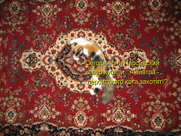 Котоматрица: - Сегодня они Персидский  ковер купили...А завтра -  персидского кота захотят!?