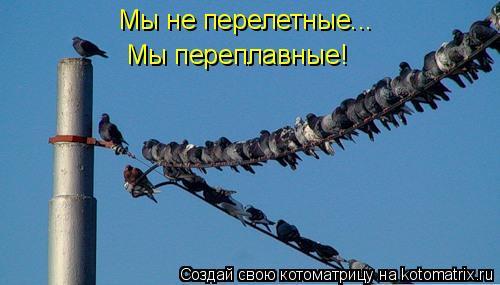 Котоматрица: Мы не перелетные... Мы переплавные!