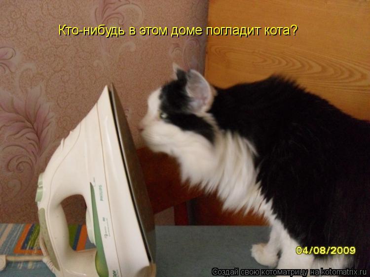 Котоматрица: Кто-нибудь в этом доме погладит кота?