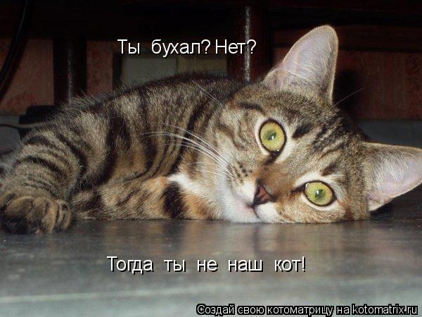 Котоматрица: Ты  бухал? Нет? Тогда  ты  не  наш  кот!