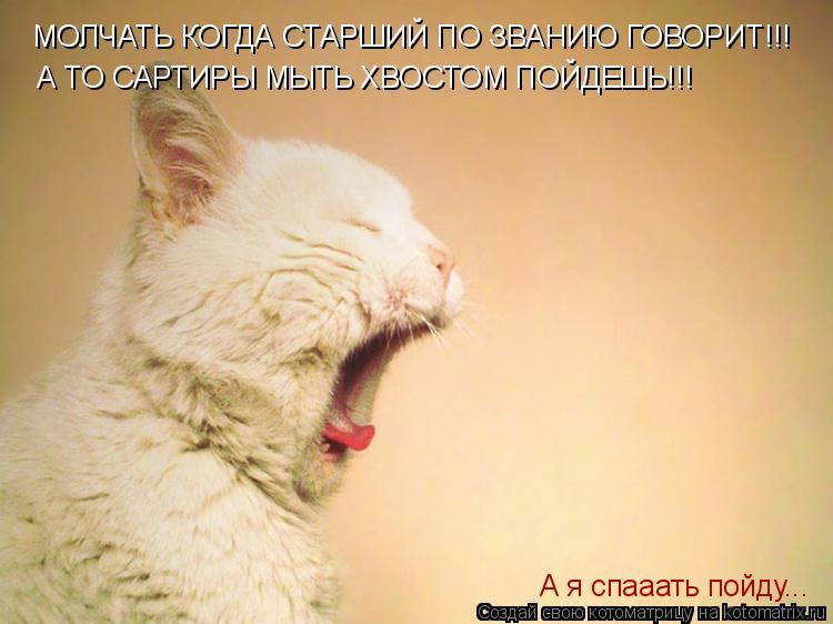 Котоматрица: МОЛЧАТЬ КОГДА СТАРШИЙ ПО ЗВАНИЮ ГОВОРИТ!!! А ТО САРТИРЫ МЫТЬ ХВОСТОМ ПОЙДЕШЬ!!! А я спааать пойду...