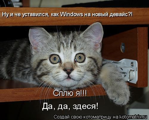 Котоматрица: Ну и че уставился, как Windows на новый девайс?! Сплю я!!! Да, да, здеся!