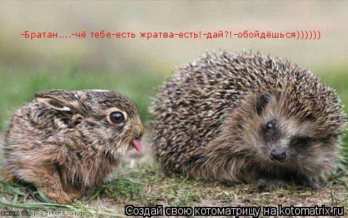 Котоматрица: -Братан....-чё тебе-есть жратва-есть!-дай?!-обойдёшься))))))