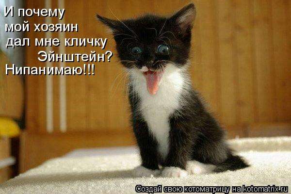 Котоматрица: И почему  мой хозяин дал мне кличку Эйнштейн? Нипанимаю!!!