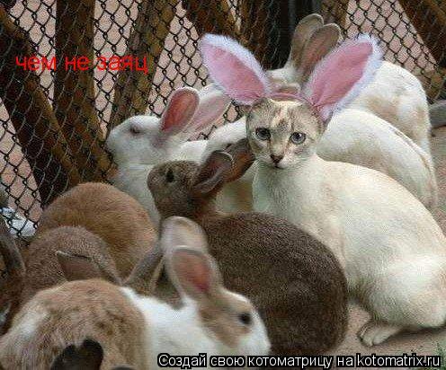Котоматрица: чем не заяц