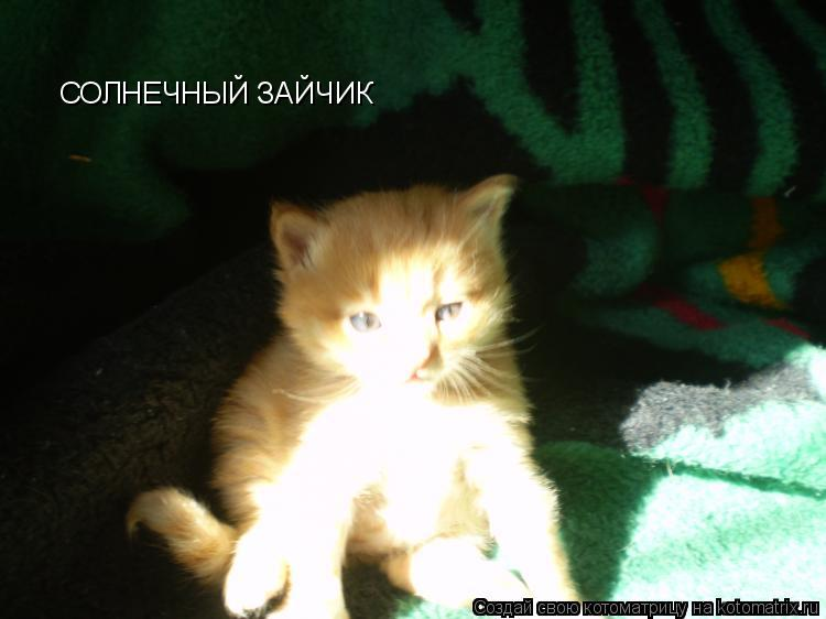 http://kotomatrix.ru/images/lolz/2009/08/24/345984.jpg