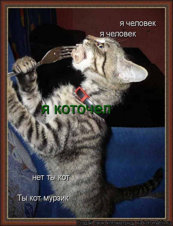 Котоматрица: я человек Ты кот мурзик я человек нет ты кот я коточел