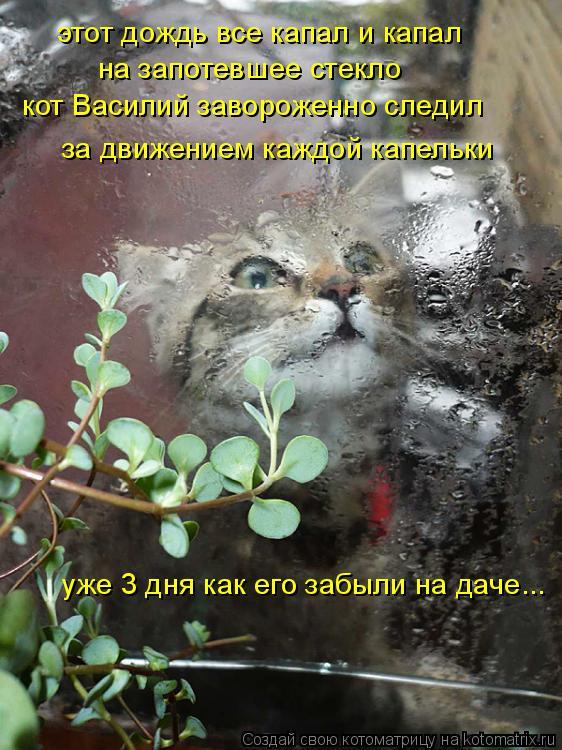 Котоматрица: этот дождь все капал и капал на запотевшее стекло кот Василий завороженно следил за движением каждой капельки уже 3 дня как его забыли на да