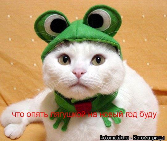 Котоматрица: что опять лягушкой на новый год буду