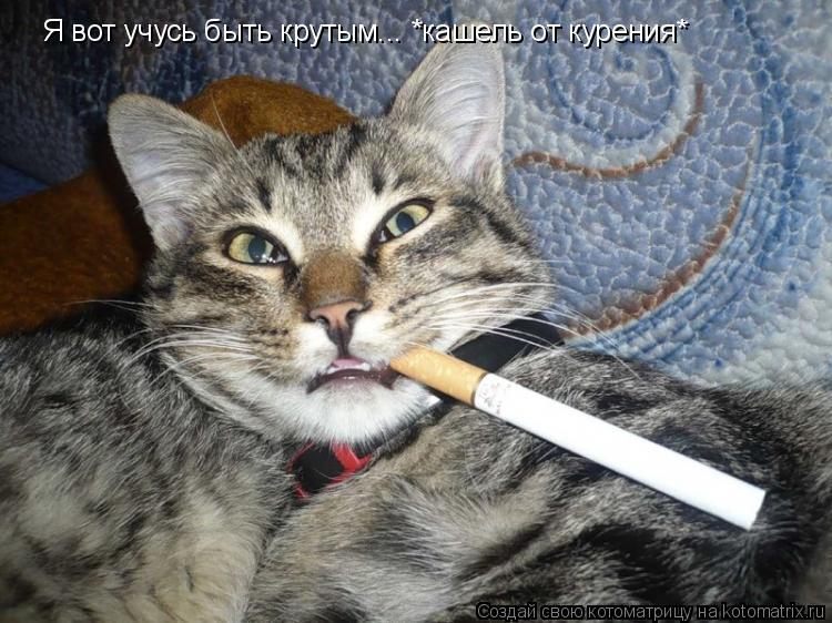 Котоматрица: Я вот учусь быть крутым... *кашель от курения*
