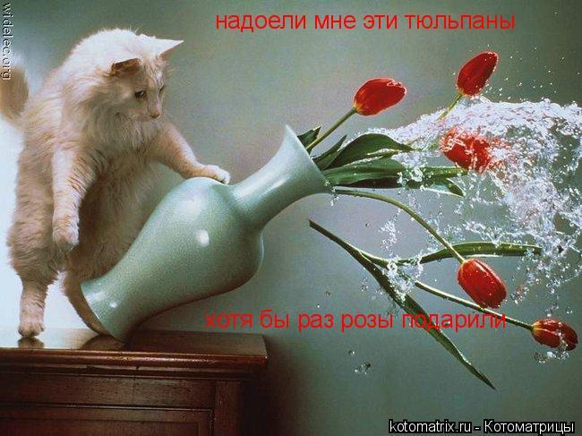 Котоматрица: надоели мне эти тюльпаны  хотя бы раз розы подарили