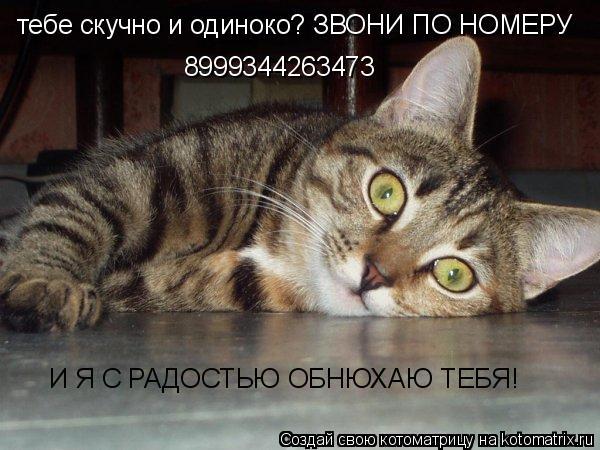 Котоматрица: тебе скучно и одиноко? ЗВОНИ ПО НОМЕРУ  8999344263473 И Я С РАДОСТЬЮ ОБНЮХАЮ ТЕБЯ!