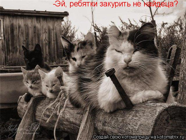 Котоматрица: -Эй, ребятки закурить не найдеца?