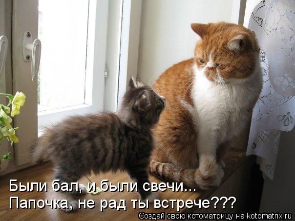 Котоматрица: Были бал, и были свечи... Папочка, не рад ты встрече???