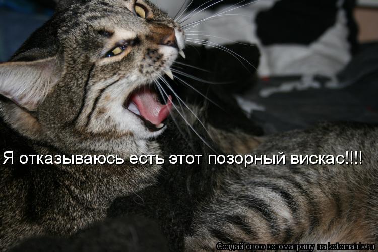 Котоматрица: Я отказываюсь есть этот позорный вискас!!!!