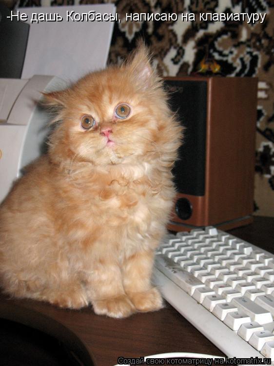 Котоматрица: -Не дашь Колбасы, написаю на клавиатуру