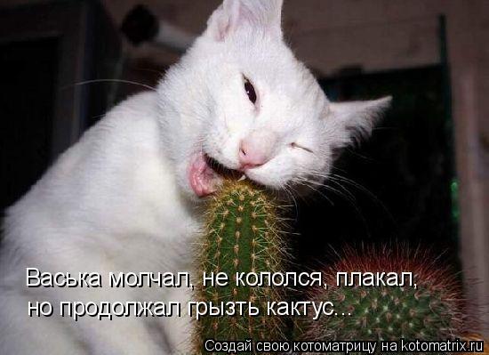 Котоматрица: но продолжал грызть кактус... Васька молчал, не кололся, плакал,