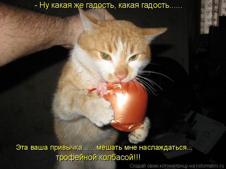 Котоматрица: трофейной колбасой!!! Эта ваша привычка.......мешать мне наслаждаться... - Ну какая же гадость, какая гадость......