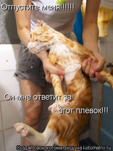 Котоматрица: Отпустите меня!!!!!!  Он мне ответит за  этот плевок!!!
