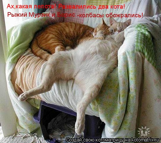 Котоматрица: Ах,какая лепота! Развалились два кота! Рыжий Мурзик и Борис -колбасы обожрались!
