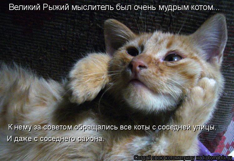 Котоматрица: Великий Рыжий мыслитель был очень мудрым котом... К нему за советом обращались все коты с соседней улицы. И даже с соседнего района.