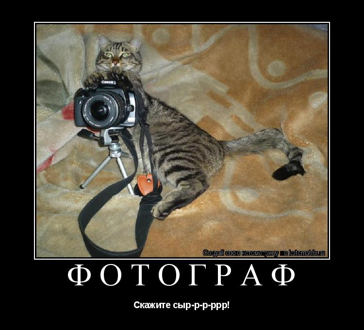 Котоматрица: Фотограф Скажите сыр-р-р-ррр!