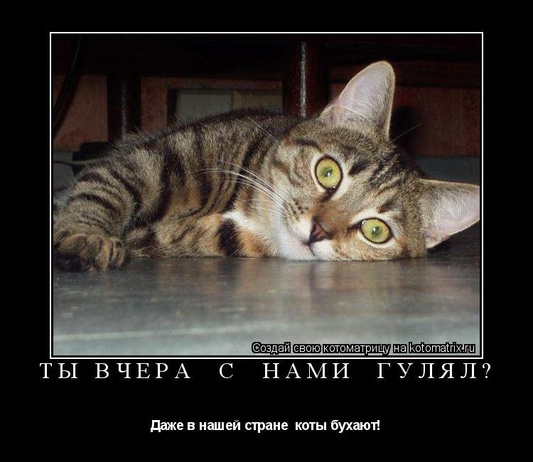 Котоматрица: Ты вчера  с  нами  гулял? Даже в нашей стране  коты бухают!