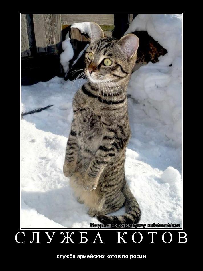 Котоматрица: служба котов служба армейских котов по росии