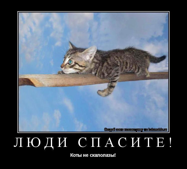 Котоматрица: Люди спасите! Коты не скалолазы!