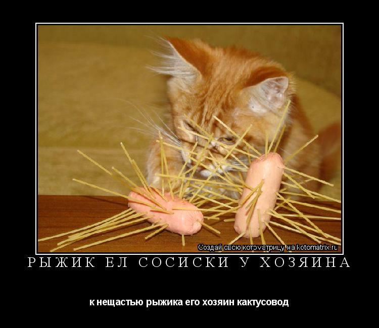 Котоматрица: Рыжик ел сосиски у хозяина к нещастью рыжика его хозяин кактусовод