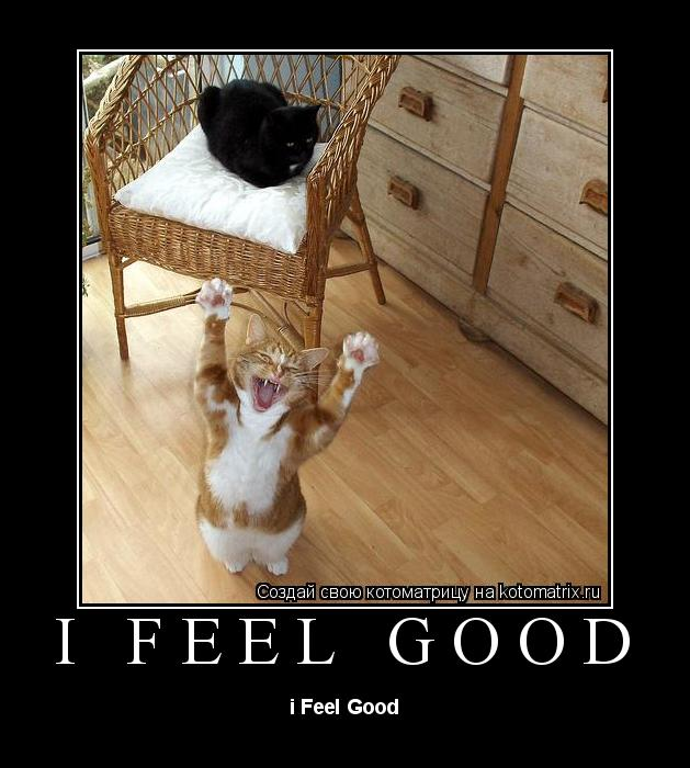 Котоматрица: i Feel good i Feel Good