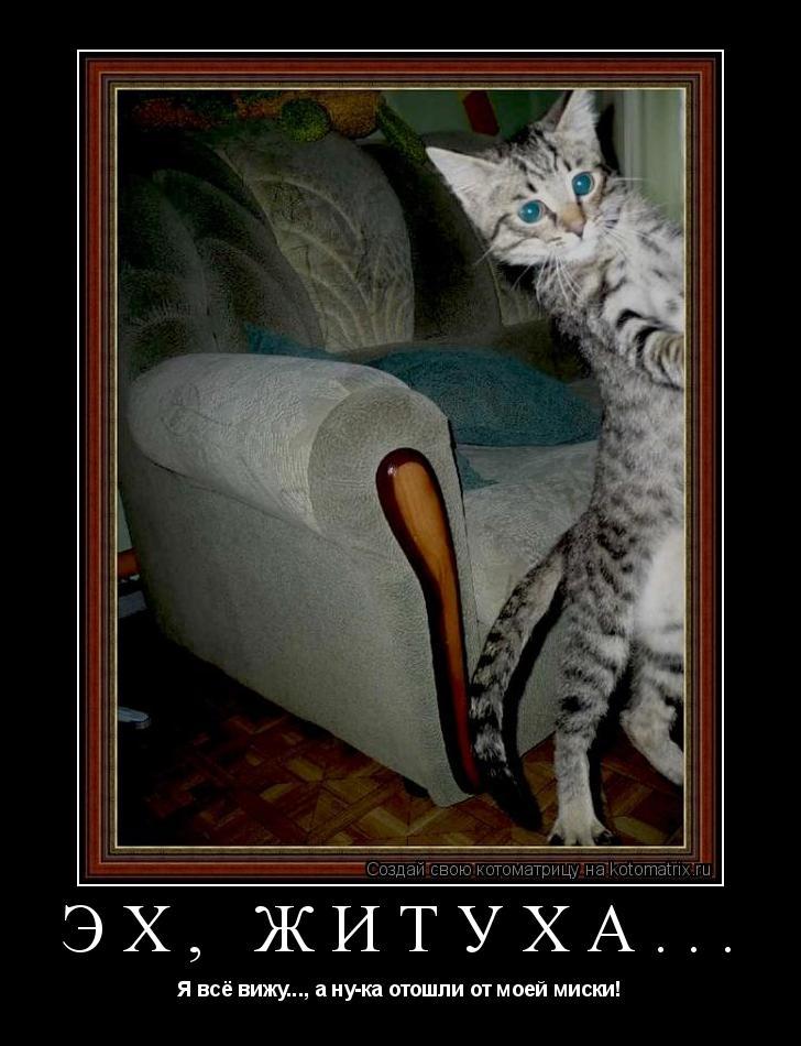 Котоматрица: Эх, житуха... Я всё вижу..., а ну-ка отошли от моей миски!
