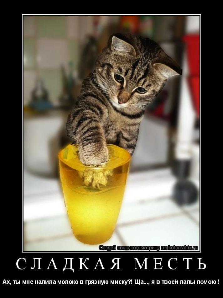 Котоматрица: Сладкая месть Ах, ты мне налила молоко в грязную миску?! Ща..., я в твоей лапы помою !