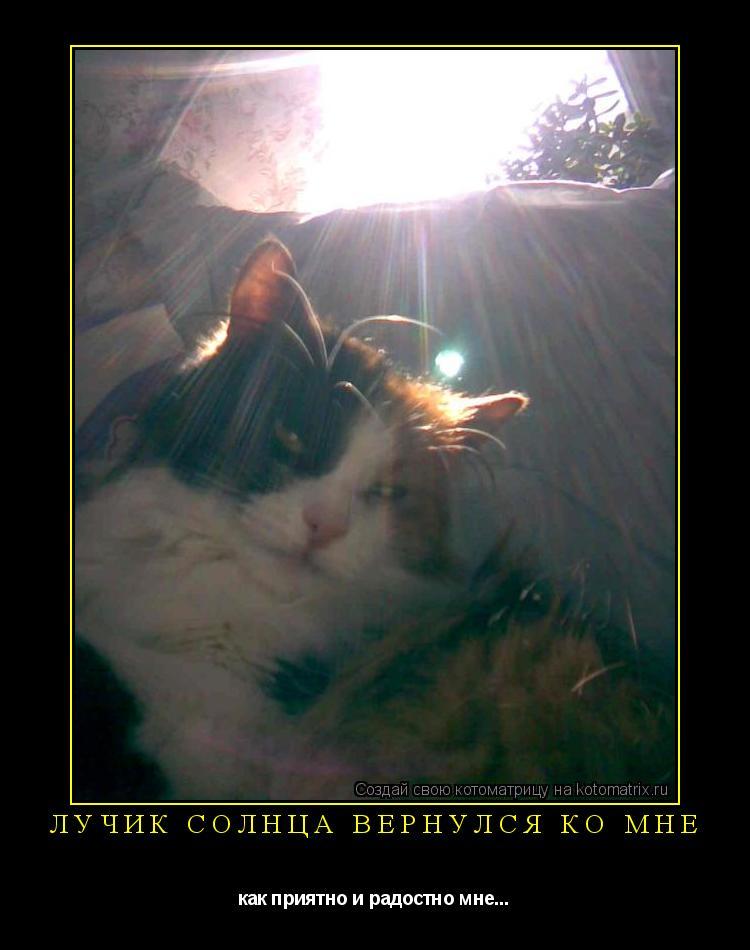 Котоматрица: лучик солнца вернулся ко мне как приятно и радостно мне...