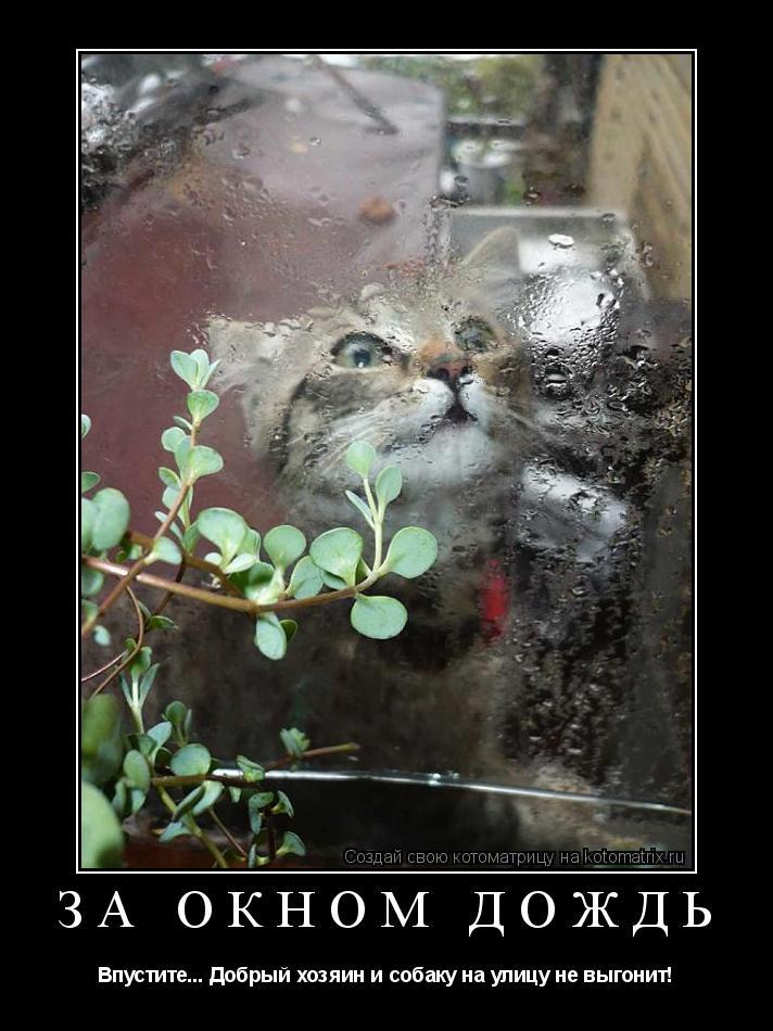 Котоматрица: За окном дождь Впустите... Добрый хозяин и собаку на улицу не выгонит!